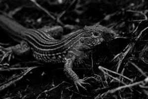 Reptile by KCPhotography12