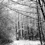 branches in winter by augenweide