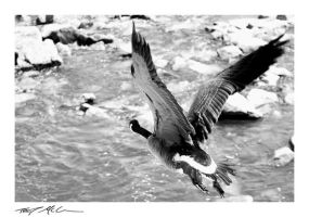 Goose by TroyMcGoughInk