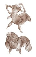 Mermanatee Studies by thomastapir