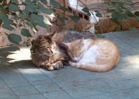 Puffball and Rusty by Ripplin