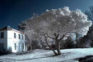 Winter Infrared by Dave-Ellis