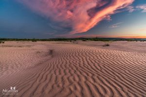 Sandy In Pink by MarshallLipp