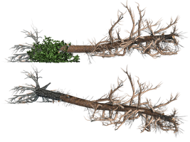 Fallen Trees 02 PNG Stock by Roys-Art