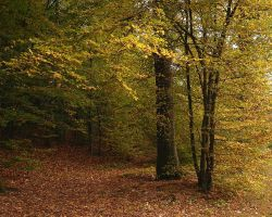 Arbres d'automne by yuushi01