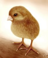 Baby chick by joscat
