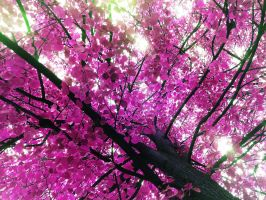 Pink tree. by macharovsky