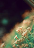 the flower by dyefish
