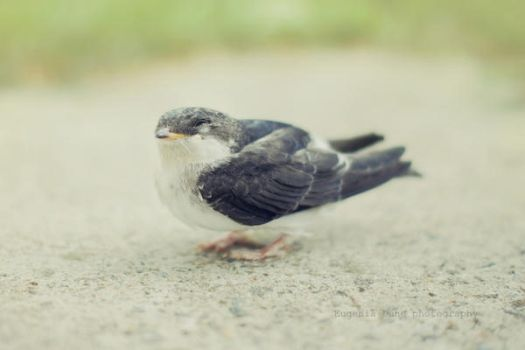 A Small Bird by eugene-dune