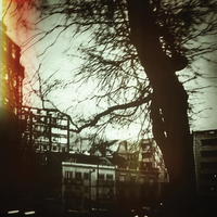 a tree in the city by rioMenor