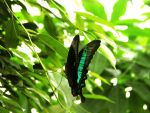 butterfly 37 by Pagan-Stock