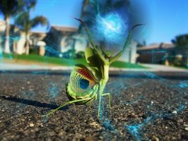 Praying Mantis 3 by slain4ever
