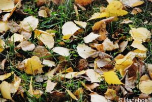 Leaves in Drammen by haneboe