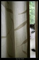 Stalker Behind The Curtains by cursed-soul