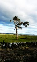 Scottish Tree by RebelAssasin311