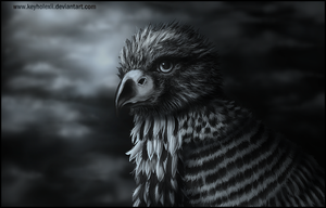 Young Eagle by keyholeXII
