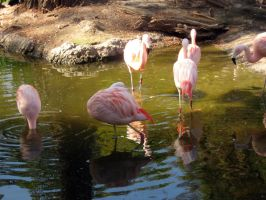 Flamingos 9 by my-dog-corky