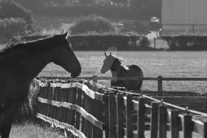 Horses in the sun by loudsilence21