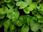 Pearls of Green by Photopathica