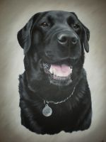 Monty by petportraitman