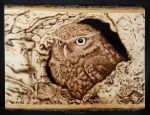 Owl - woodburning by brandojones