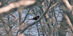 Winter Bird 2 by Zuggamasta