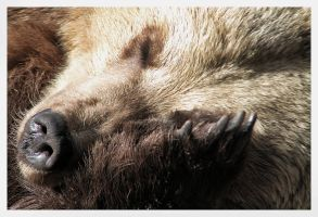 Snip Snap He is having a Nap by Arawn-Photography