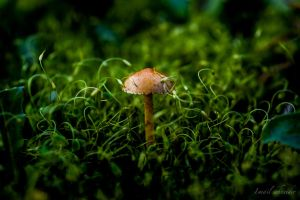 Growing In Moss by isischneider