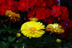 mixed bunch by awjay