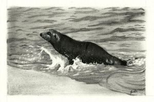 Sea Lion by aakritiarts