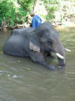 Elephant Water Hole by MNCrowgirl
