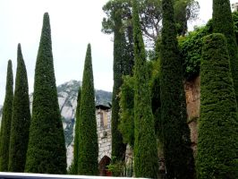 Cypresses by blue-crystall
