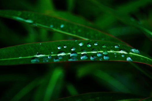 After The Rain no.8253 by valentino320