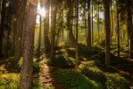Dream Forest by Adres89