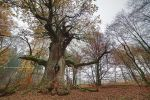 Chimney Oak by Michelle-Fennel