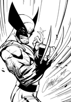 Wolverine - Inks by J-Skipper