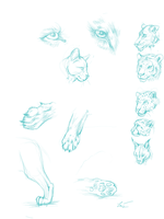 feline anatomy and species study by SUNNYxAUTUMN