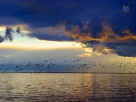 Seagulls Fying Under Approaching Storm by wolfwings1