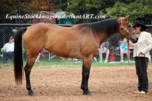 Quarter Horse 80 by EquineStockImagery