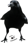 Cut-out stock PNG 46 - proud crow by Momotte2stocks