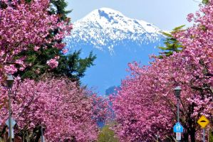 Spring in the Pacific Northwest by WestSideofMidnight