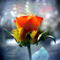 ....rose by AdrianaKH-75