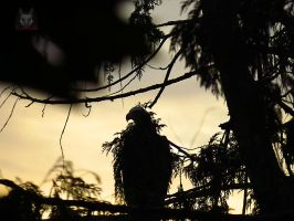 Eagle Camoflaged As A Branch by wolfwings1