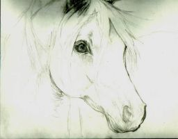 Horse Head_Portrait Sketch by EmeraldAbsynth