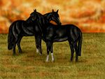 Black Horses by Golden-Horse-Stables