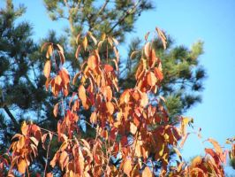 Autumn3: Colours of the Time by brego