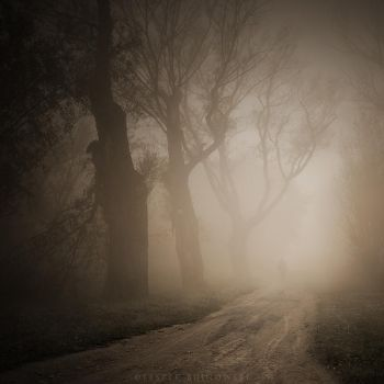 In the mist by Alshain4
