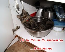 I'm In Your Cupboards by 12monthsOFwinter