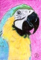 Sketch Card: Island Dreams - 9 by JasonShoemaker