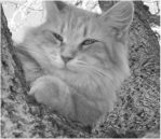 a tree cat by Cree61